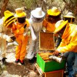Ph. Martín Wayra, los apicultores